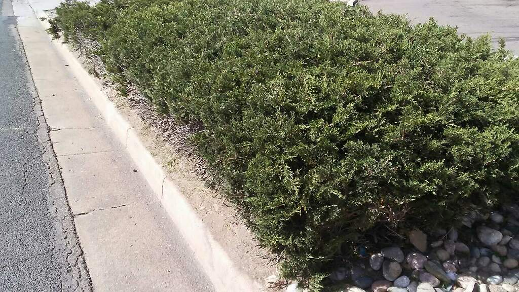 commercial-hedge-trimming-3