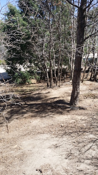 leaf-removal-colorado-springs-before-and-after5